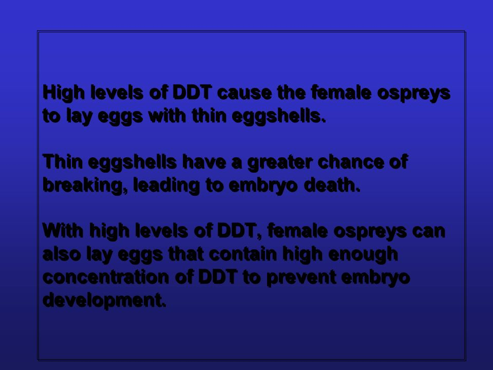 High levels of DDT cause the female ospreys to lay eggs with thin eggshells. Thin eggshells have a greater chance of breaking, leading to embryo death. With high levels of DDT, female ospreys can also lay eggs that contain high enough concentration of DDT to prevent embryo development.