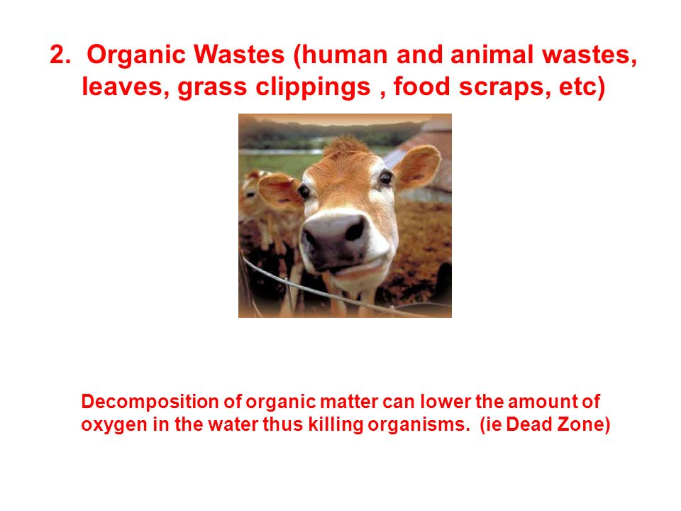 2. Organic Wastes (human and animal wastes, leaves, grass clippings , food scraps, etc)