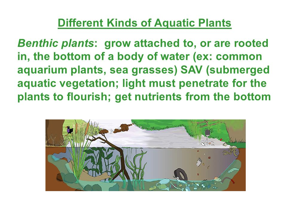 Different Kinds of Aquatic Plants