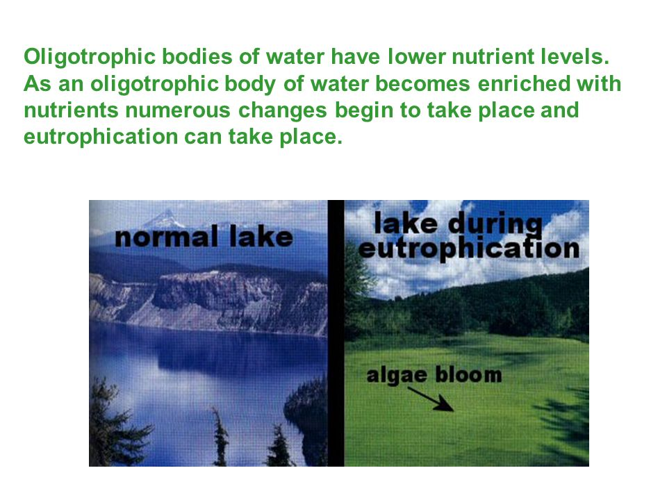 Oligotrophic bodies of water have lower nutrient levels