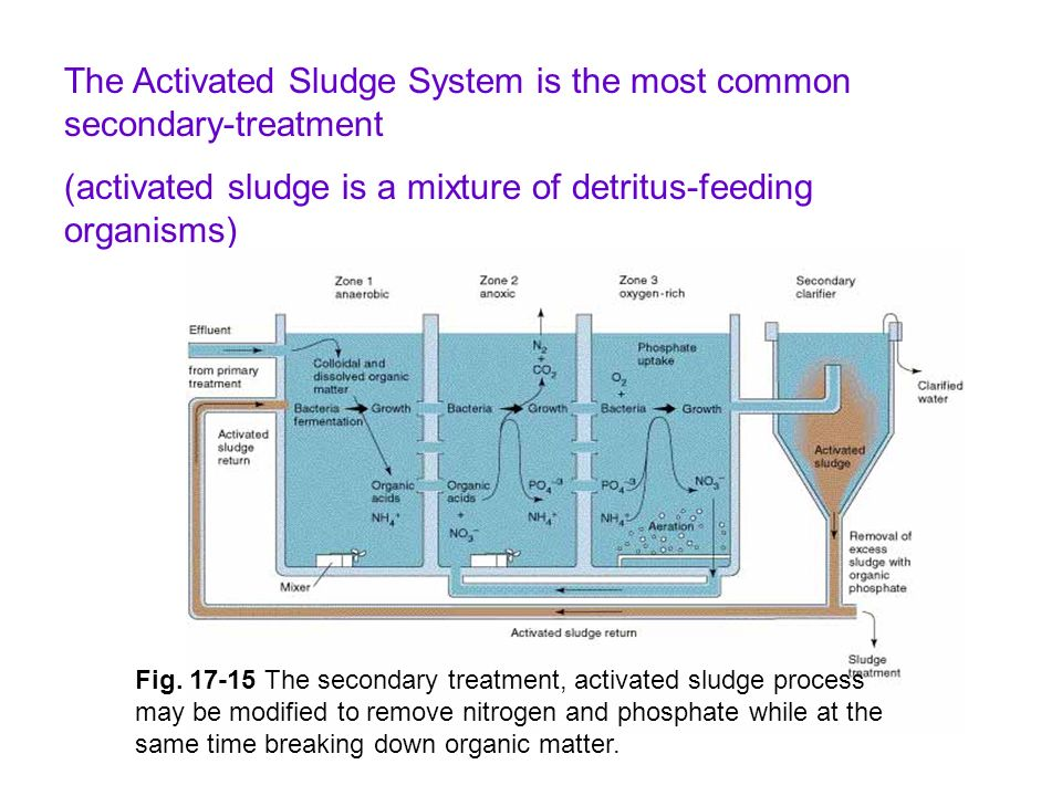 The Activated Sludge System is the most common secondary-treatment