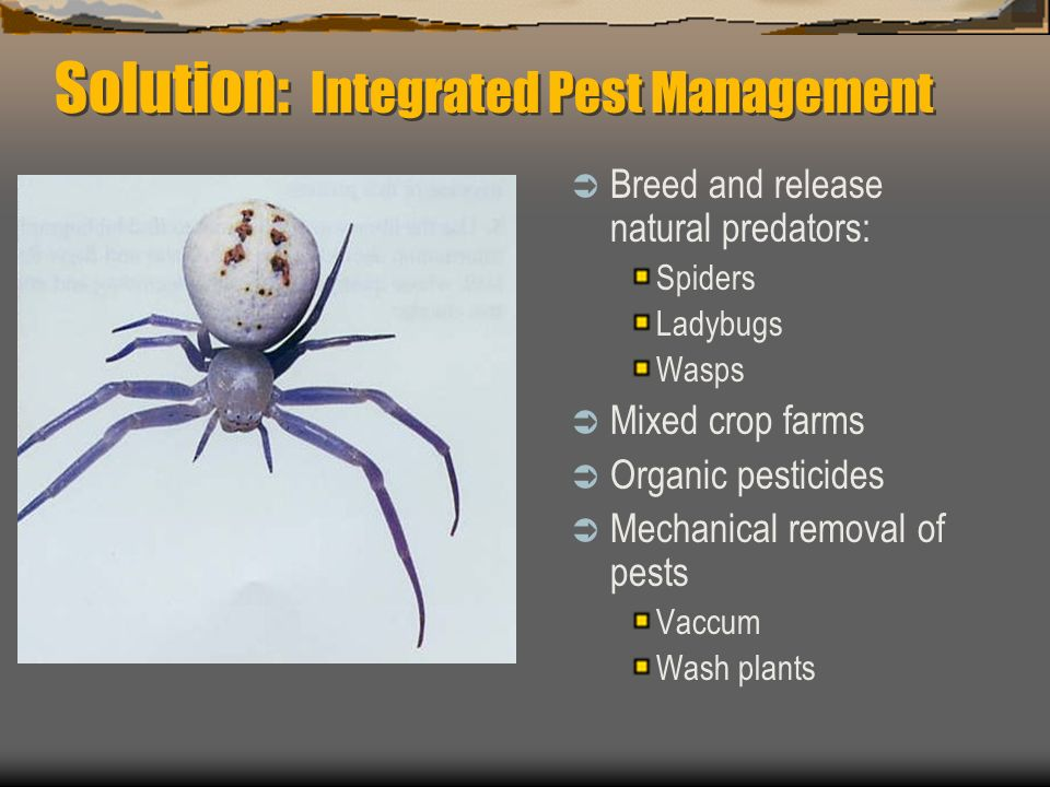 Solution: Integrated Pest Management
