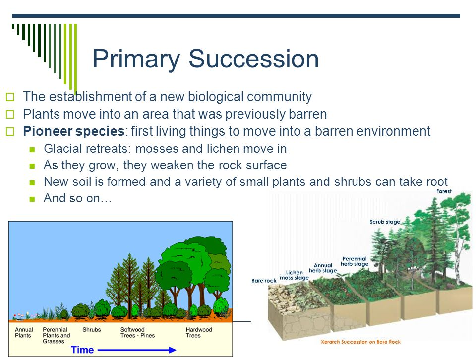 Primary Succession The establishment of a new biological community