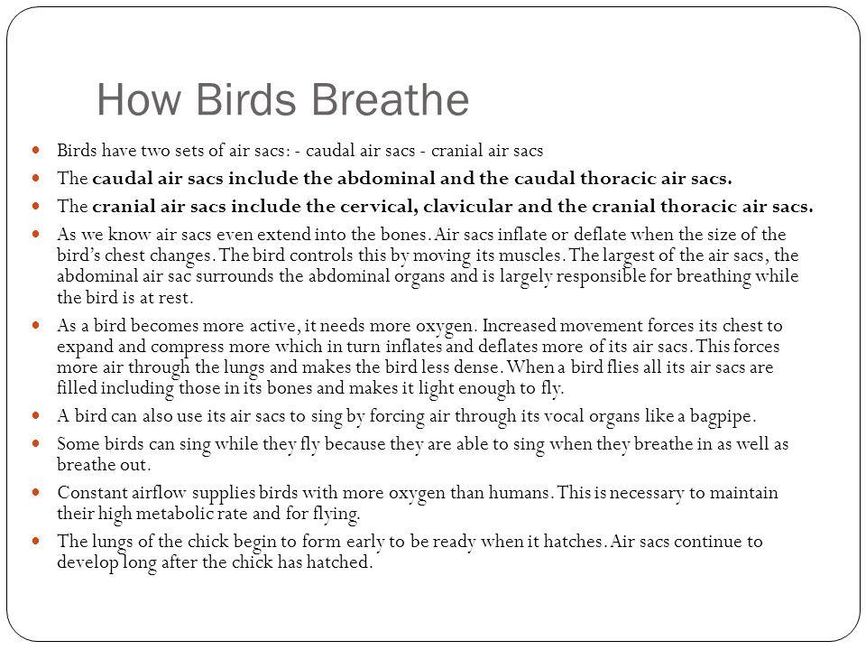 How Birds Breathe Birds have two sets of air sacs: - caudal air sacs - cranial air sacs.