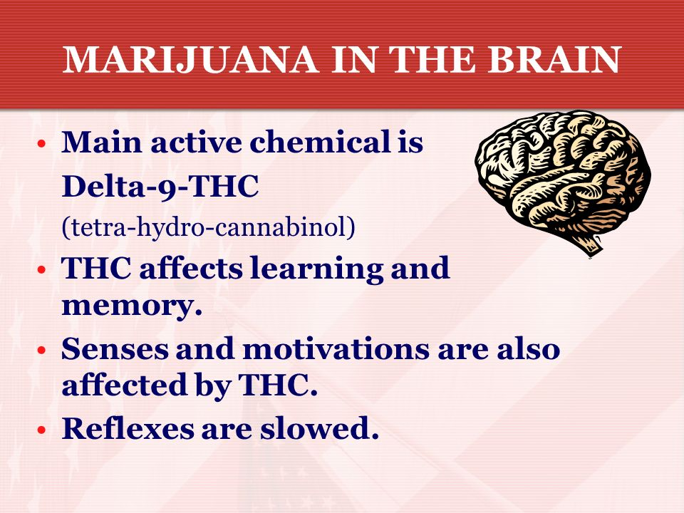 MARIJUANA IN THE BRAIN Main active chemical is Delta-9-THC
