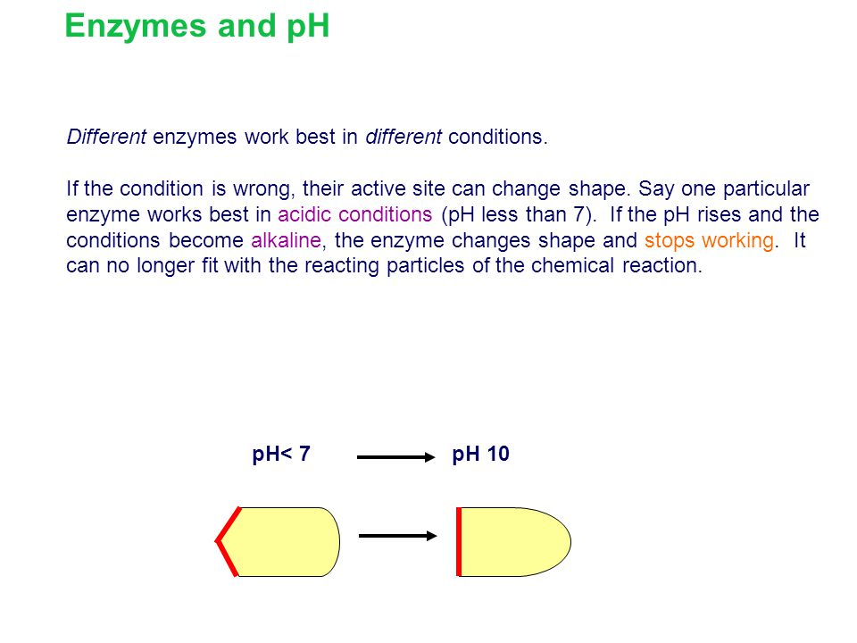 Enzymes and pH Different enzymes work best in different conditions.