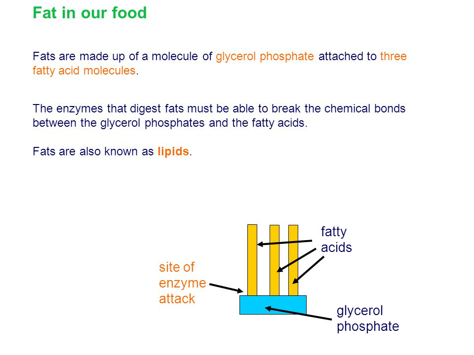 Fat in our food fatty acids site of enzyme attack glycerol phosphate