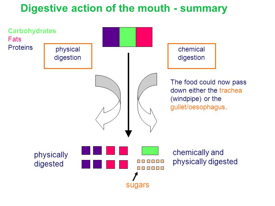Digestive action of the mouth - summary