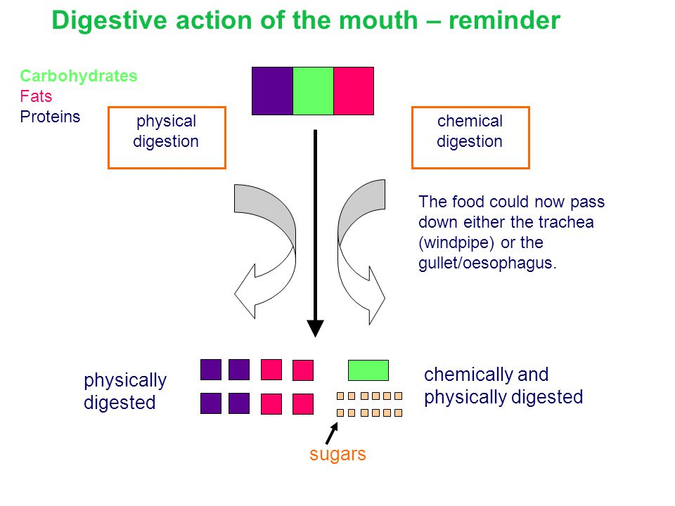 Digestive action of the mouth – reminder
