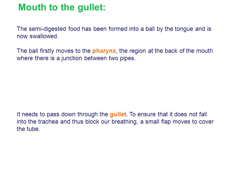 Mouth to the gullet: The semi-digested food has been formed into a ball by the tongue and is now swallowed.