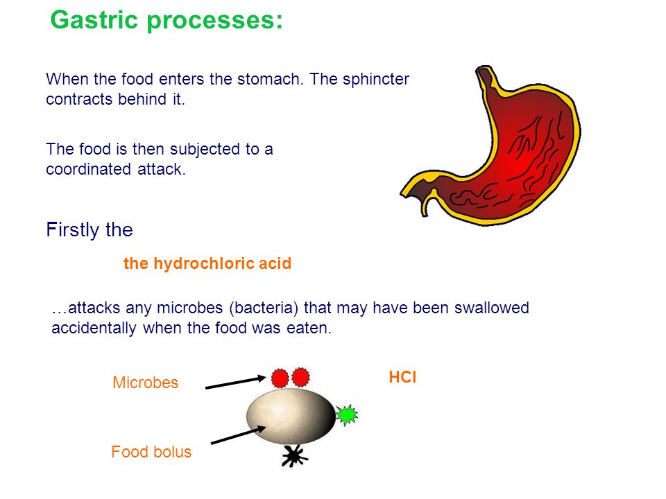 Gastric processes: Firstly the