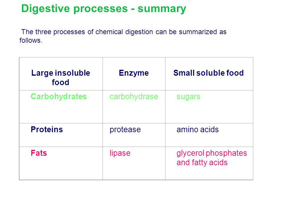 Digestive processes - summary