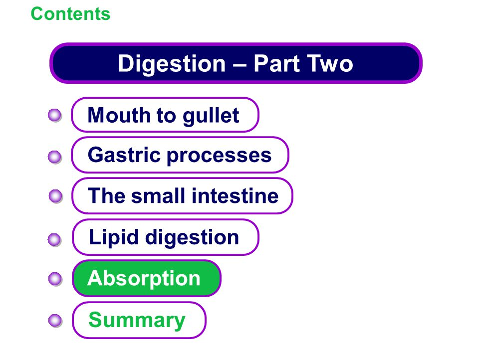 Digestion – Part Two Mouth to gullet Gastric processes