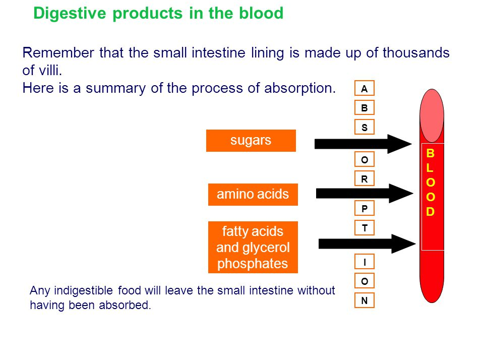 Digestive products in the blood