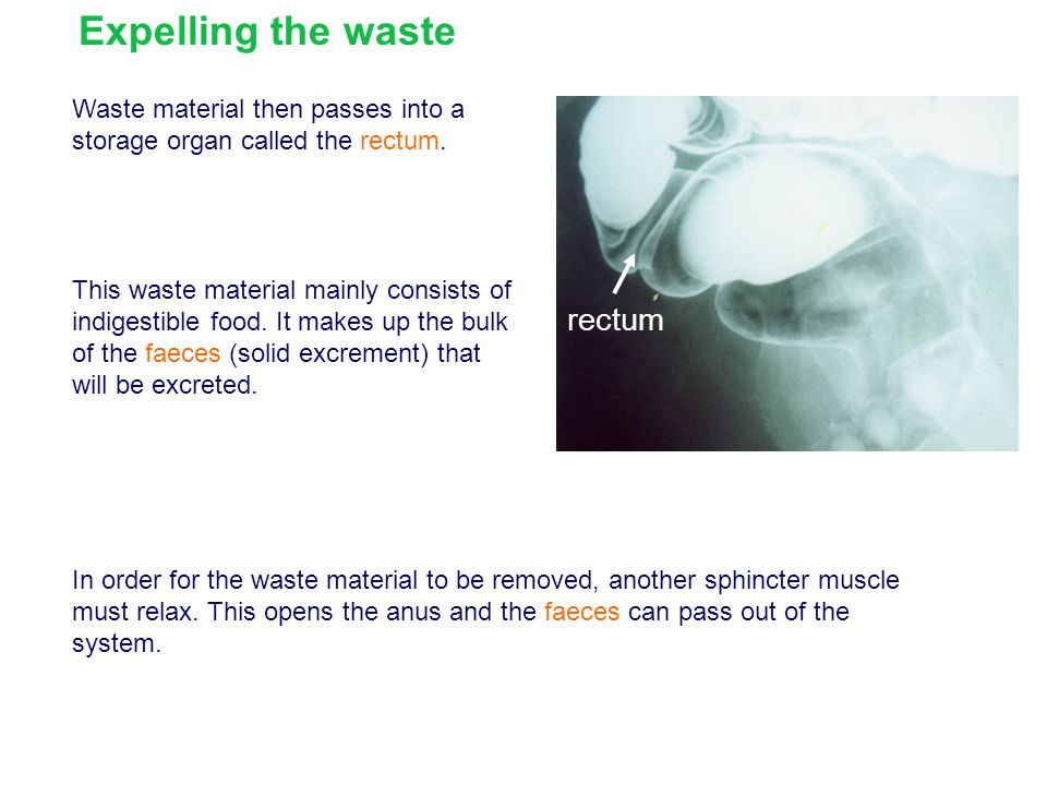 Expelling the waste rectum