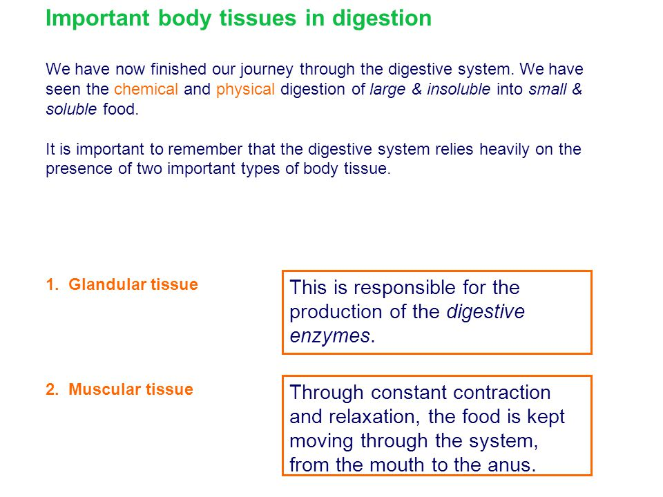 Important body tissues in digestion
