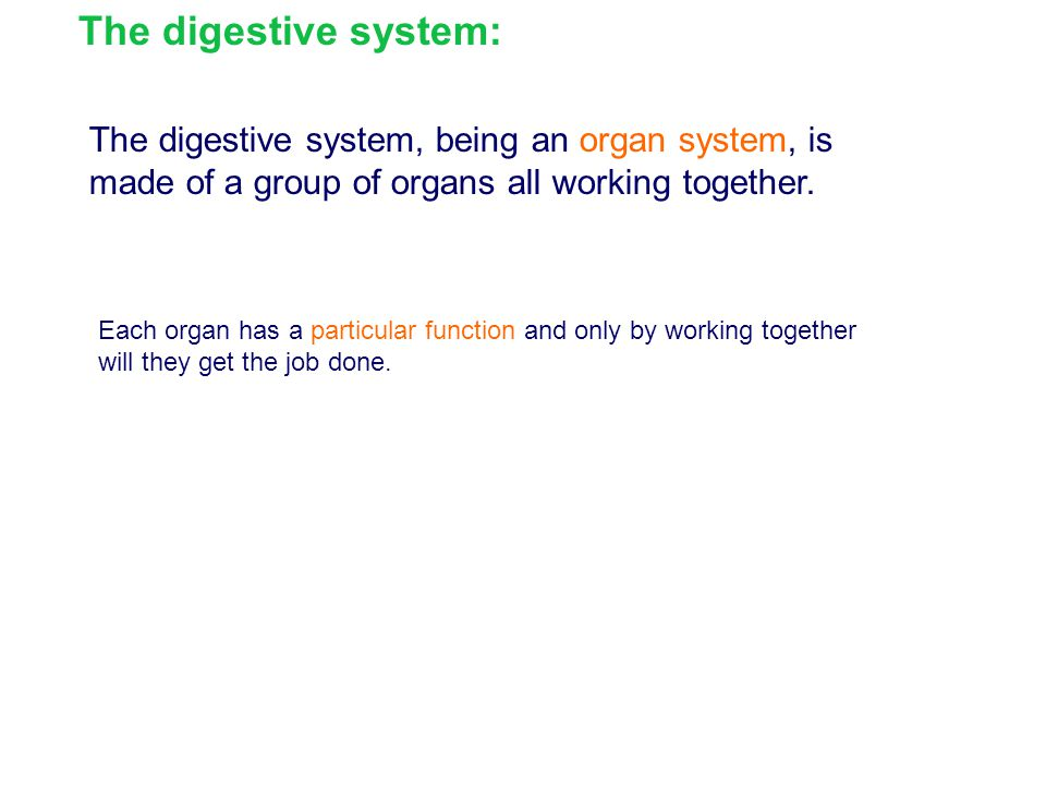 The digestive system: The digestive system, being an organ system, is made of a group of organs all working together.