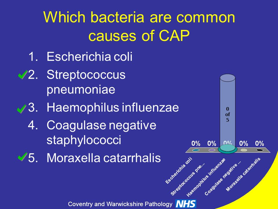 Which bacteria are common causes of CAP