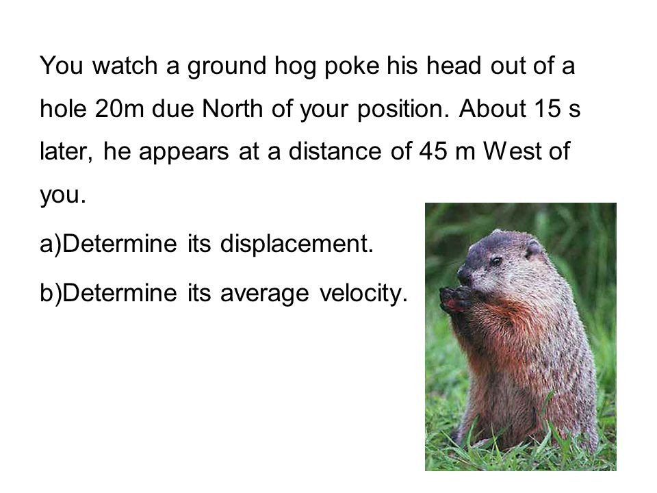 You watch a ground hog poke his head out of a hole 20m due North of your position. About 15 s later, he appears at a distance of 45 m West of you.