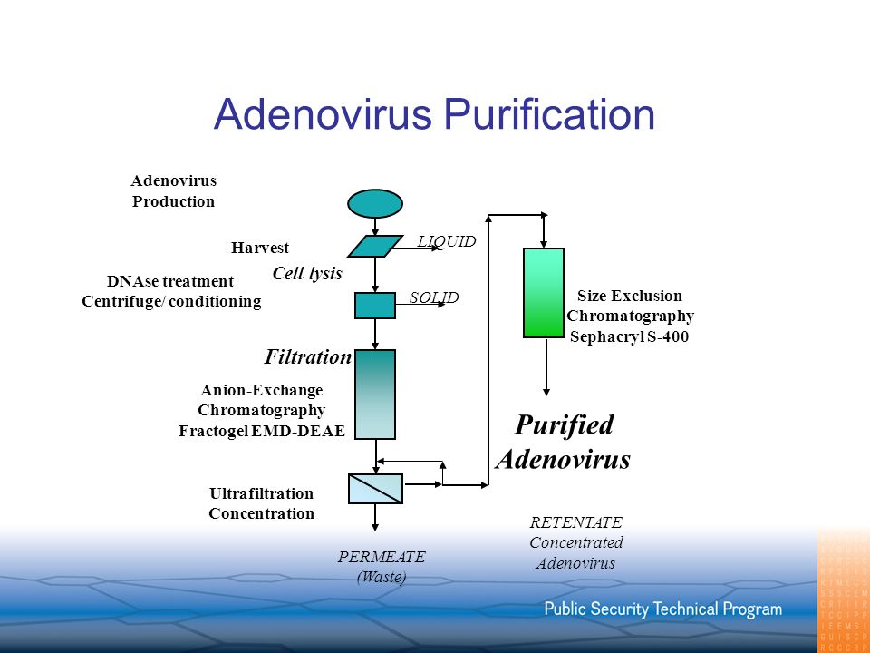 Adenovirus Purification