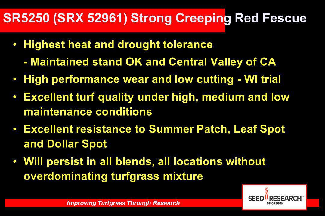 SR5250 (SRX 52961) Strong Creeping Red Fescue