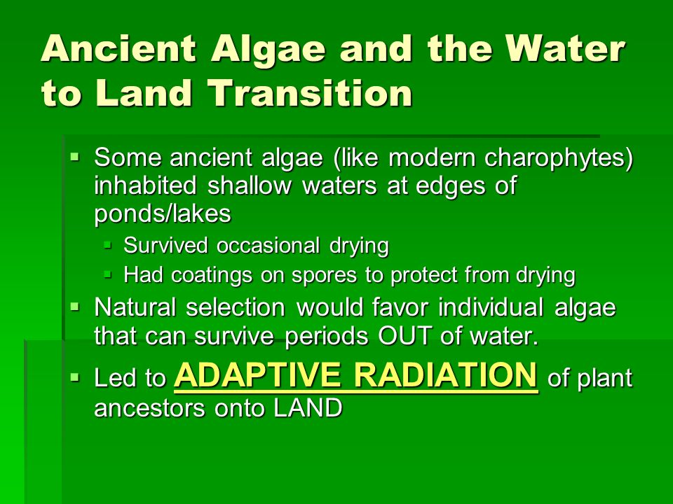 Ancient Algae and the Water to Land Transition
