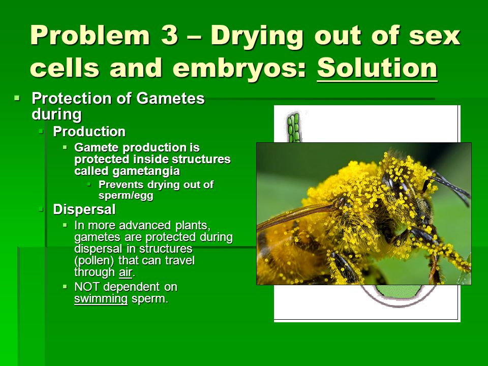 Problem 3 – Drying out of sex cells and embryos: Solution