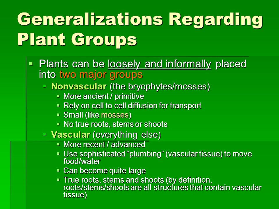 Generalizations Regarding Plant Groups