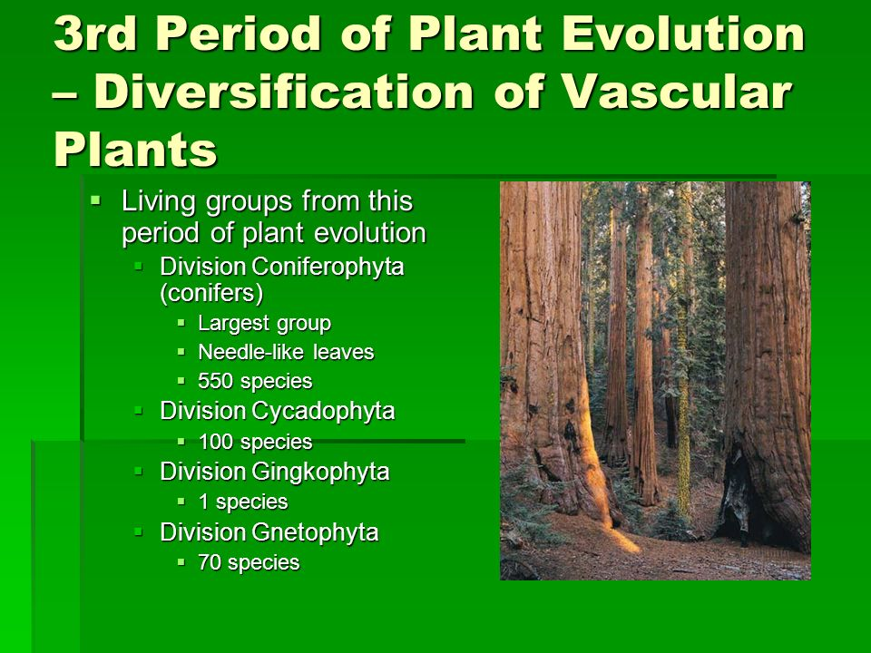 3rd Period of Plant Evolution – Diversification of Vascular Plants