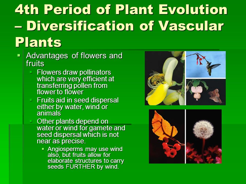 4th Period of Plant Evolution – Diversification of Vascular Plants