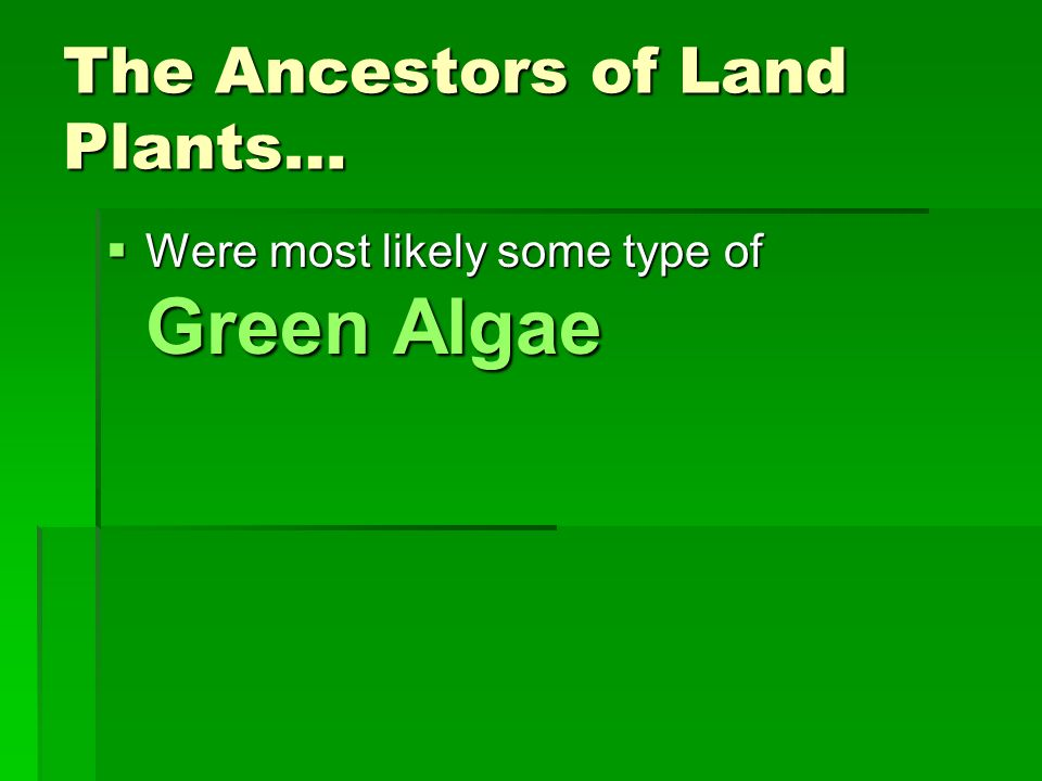 The Ancestors of Land Plants…