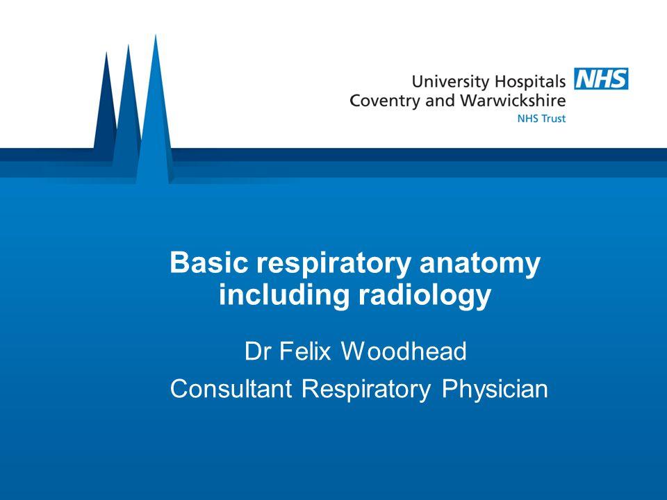 Basic respiratory anatomy including radiology