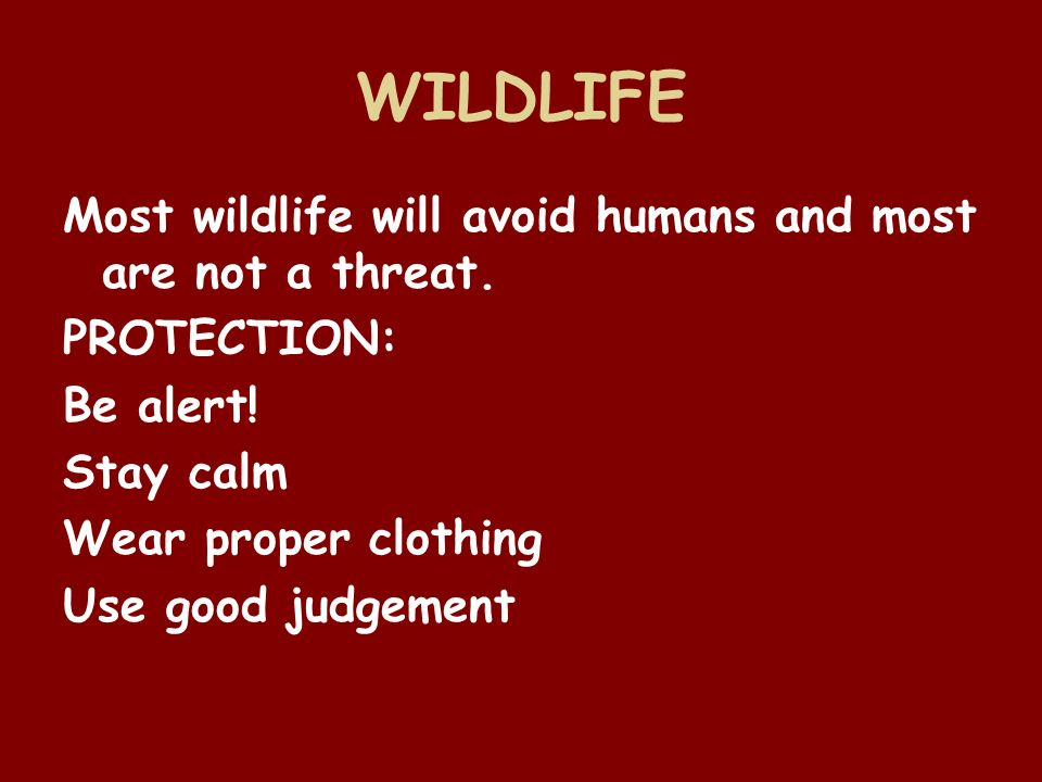 WILDLIFE Most wildlife will avoid humans and most are not a threat.