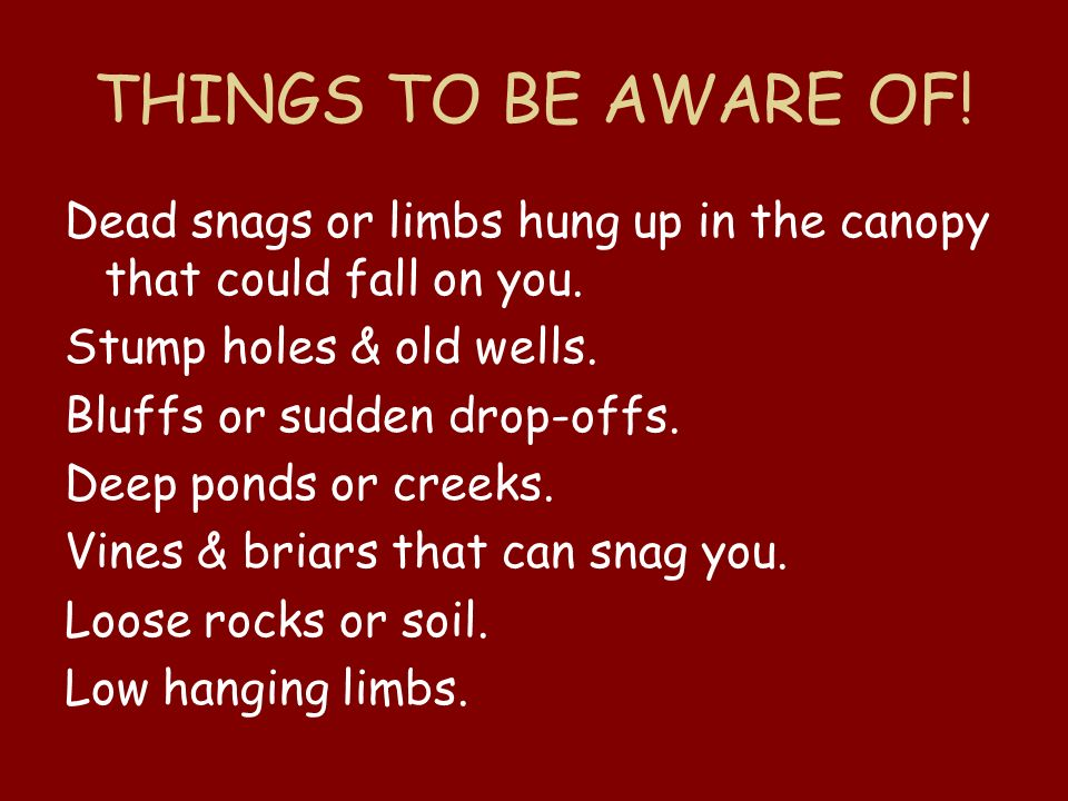 THINGS TO BE AWARE OF! Dead snags or limbs hung up in the canopy that could fall on you. Stump holes & old wells.