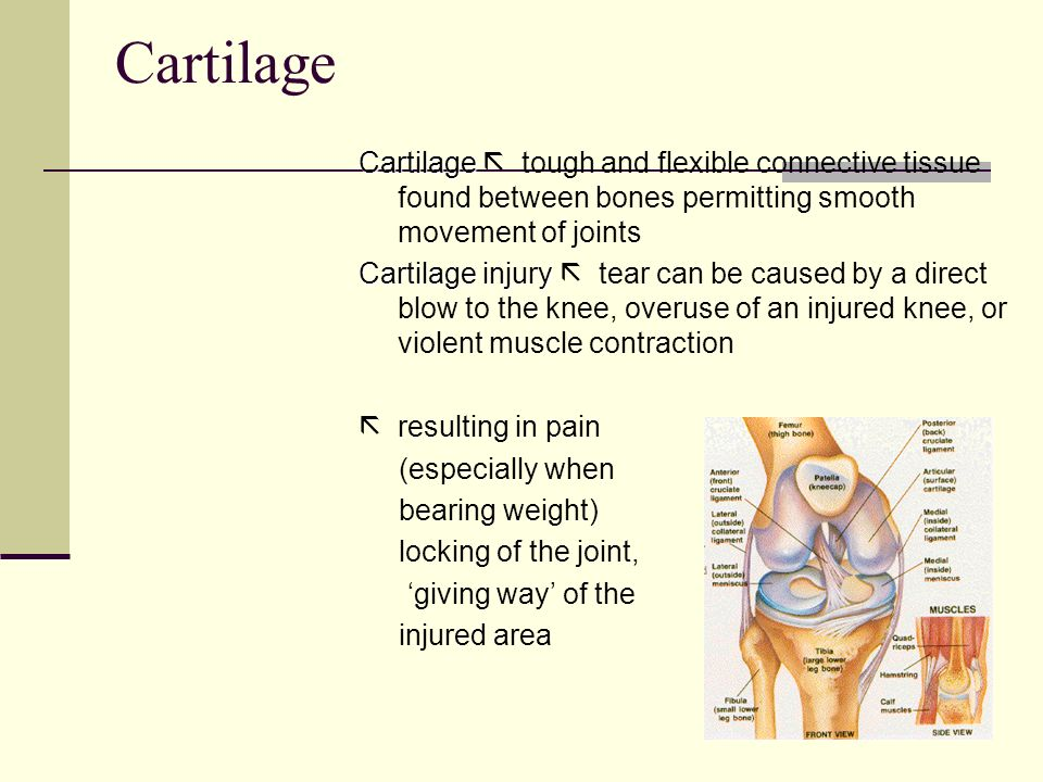 Cartilage Cartilage  tough and flexible connective tissue found between bones permitting smooth movement of joints.