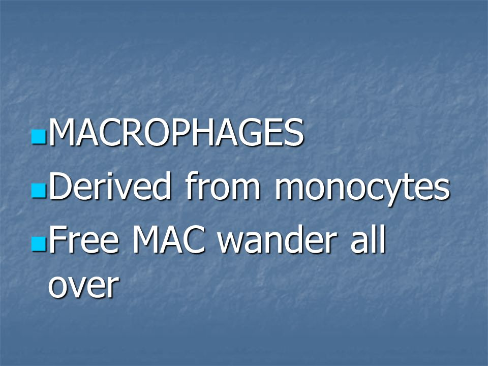 MACROPHAGES Derived from monocytes Free MAC wander all over