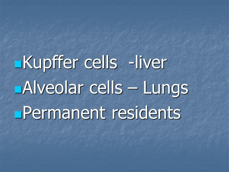 Kupffer cells -liver Alveolar cells – Lungs Permanent residents