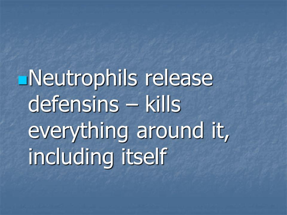 Neutrophils release defensins – kills everything around it, including itself