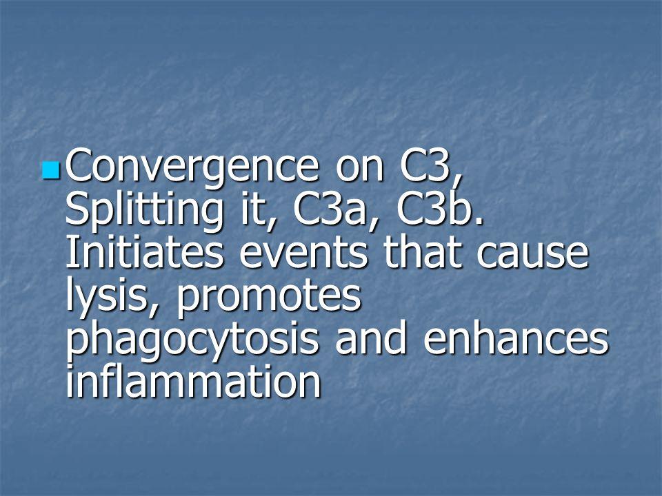 Convergence on C3, Splitting it, C3a, C3b