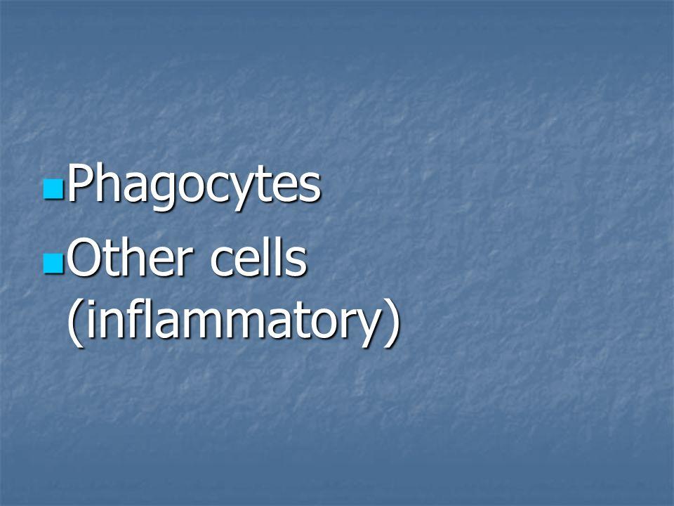 Phagocytes Other cells (inflammatory)
