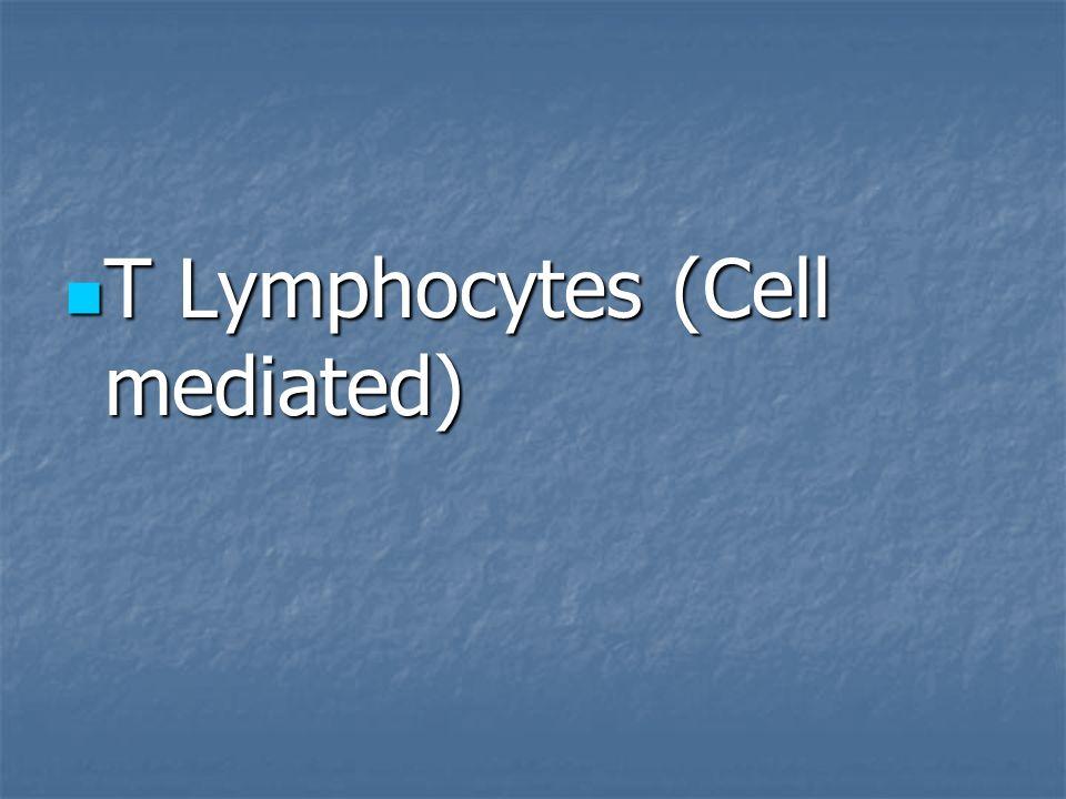 T Lymphocytes (Cell mediated)
