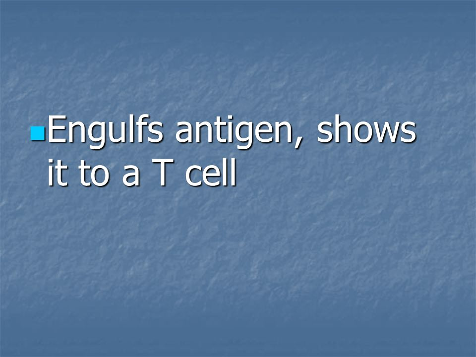 Engulfs antigen, shows it to a T cell