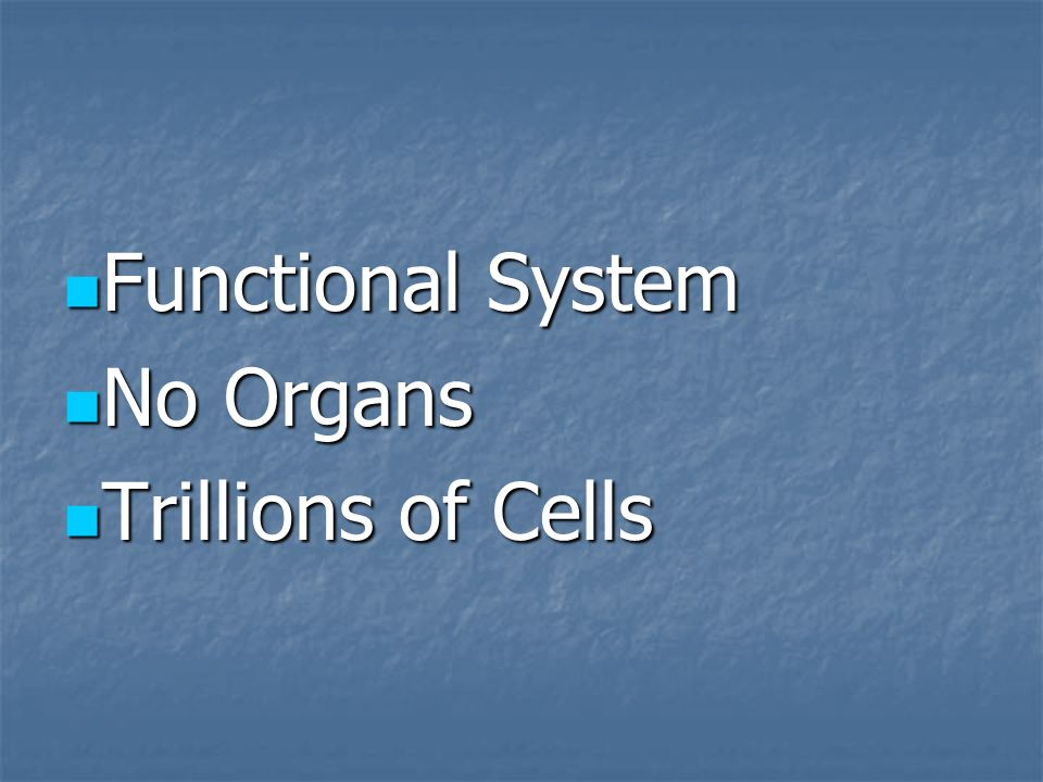 Functional System No Organs Trillions of Cells