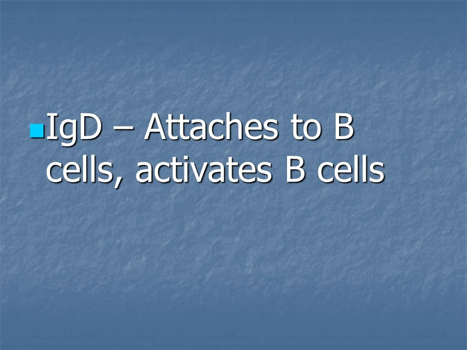 IgD – Attaches to B cells, activates B cells