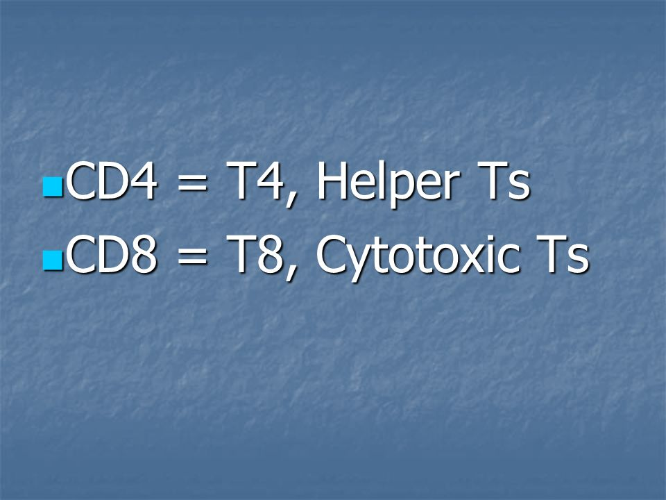 CD4 = T4, Helper Ts CD8 = T8, Cytotoxic Ts
