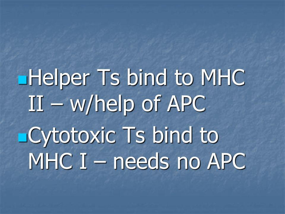 Helper Ts bind to MHC II – w/help of APC