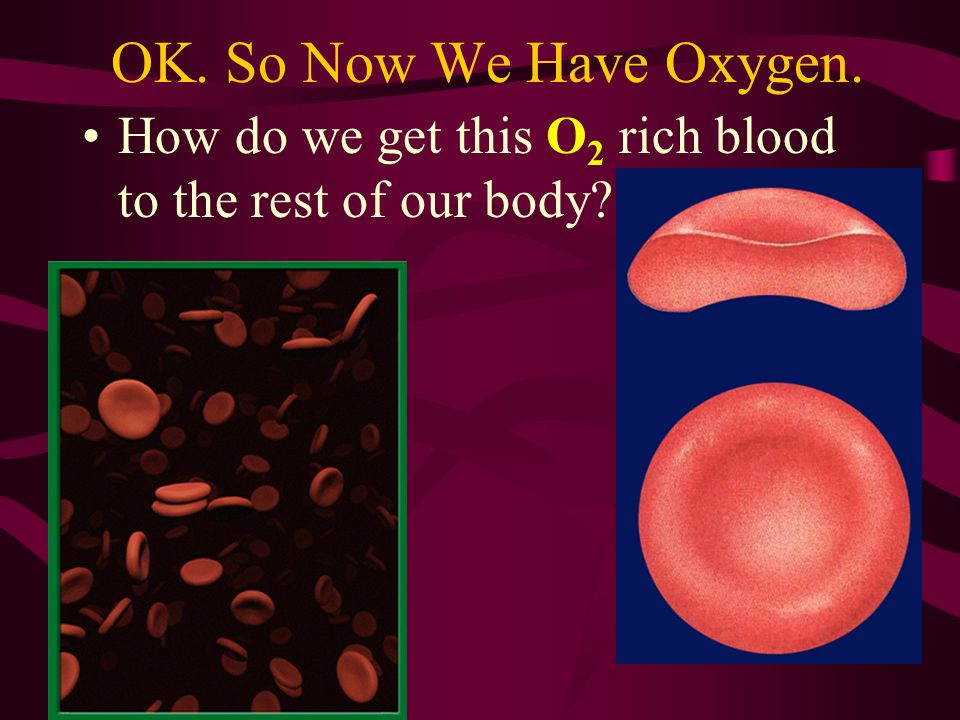OK. So Now We Have Oxygen. How do we get this O2 rich blood to the rest of our body