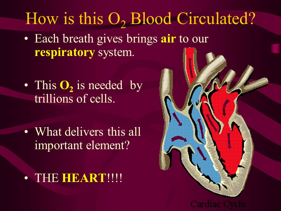 How is this O2 Blood Circulated