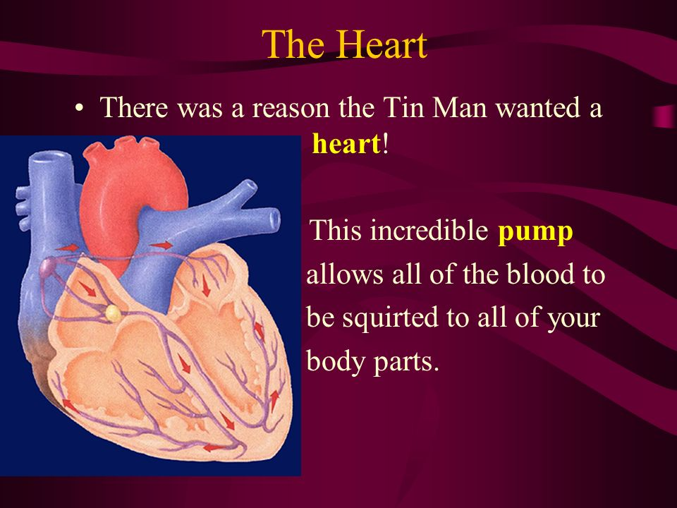 There was a reason the Tin Man wanted a heart!