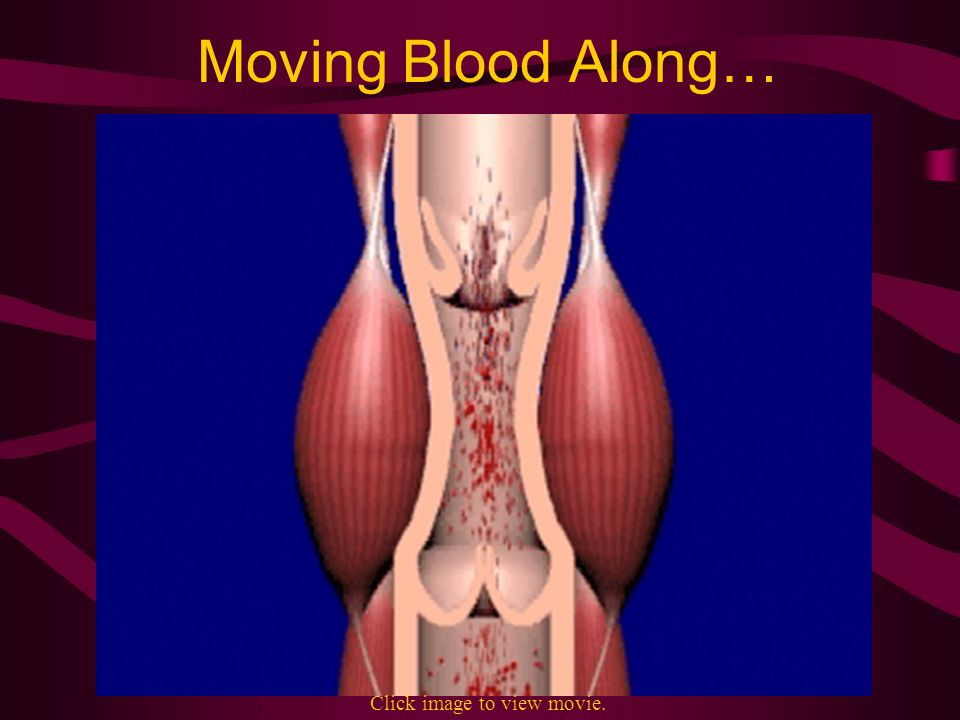 Moving Blood Along… Click image to view movie.